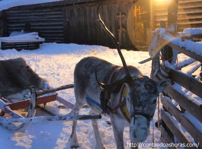 Snowmobile e Tour de Rena na Lapônia