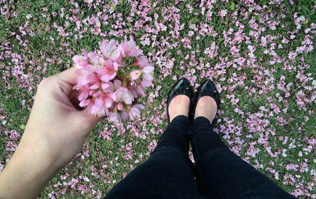 cerejeiras 3