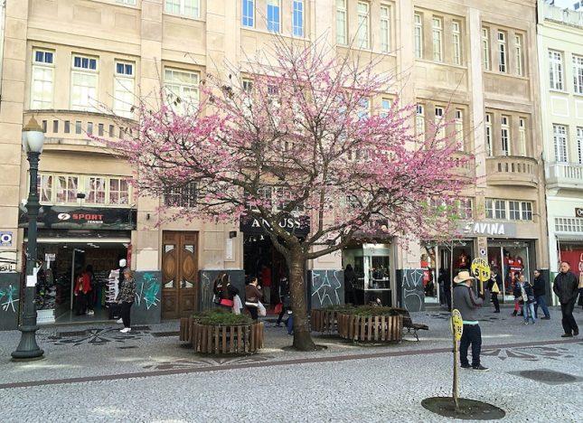 cerejeiras 5