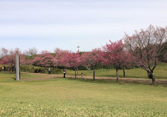 cerejeiras 8