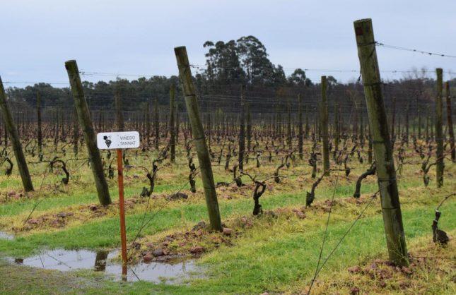 Uruguai: Um dia nas vinícolas perto de Montevidéu