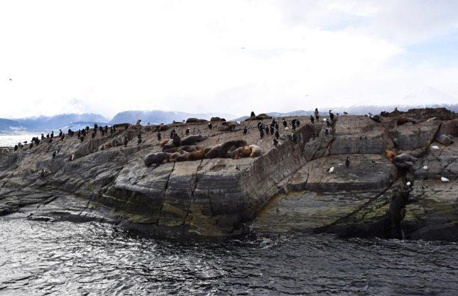 isla martillo ushuaia inverno (1)