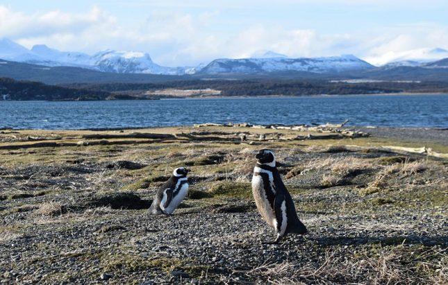 isla martillo ushuaia inverno (12)