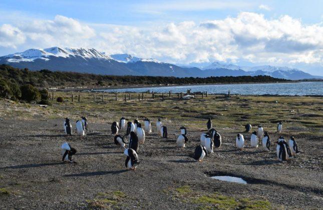 isla martillo ushuaia inverno (13)