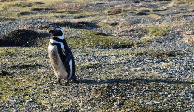 isla martillo ushuaia inverno (14)