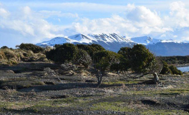 isla martillo ushuaia inverno (15)