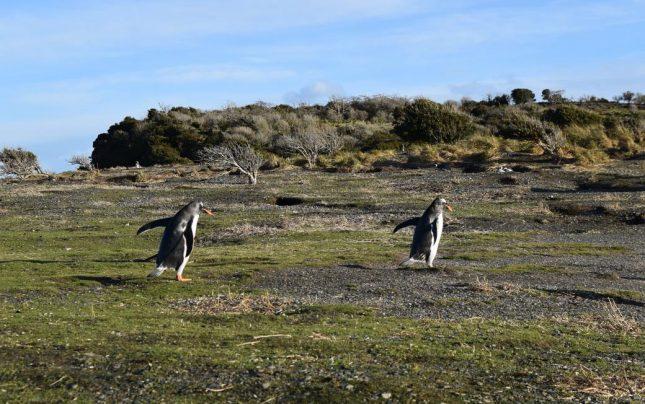 isla martillo ushuaia inverno (17)