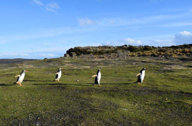isla martillo ushuaia inverno (18)