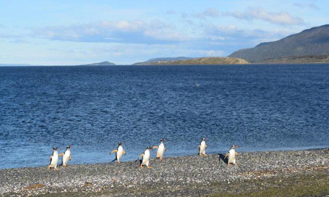 isla martillo ushuaia inverno (19)