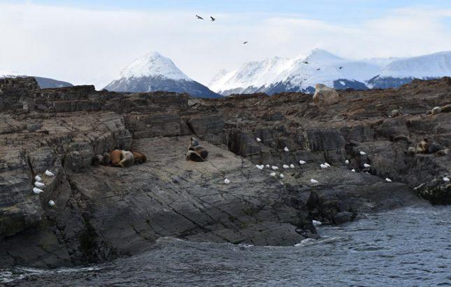 isla martillo ushuaia inverno (2)