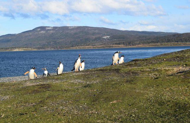 isla martillo ushuaia inverno (20)