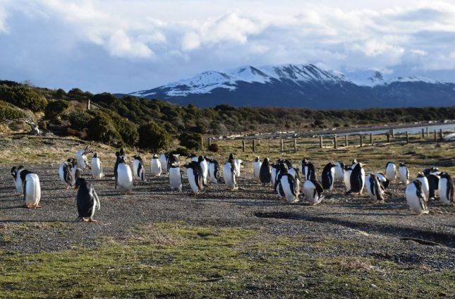 isla martillo ushuaia inverno (22)