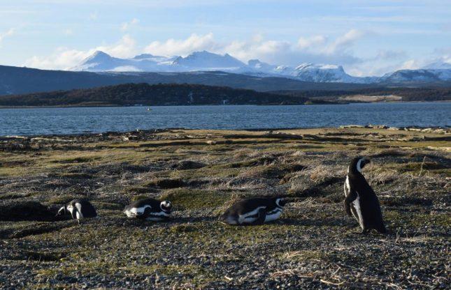 isla martillo ushuaia inverno (23)