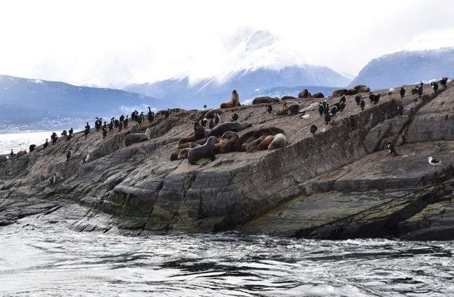 isla martillo ushuaia inverno (4)