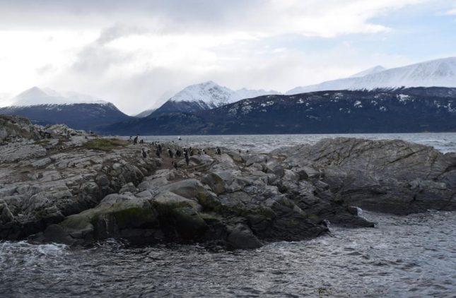 isla martillo ushuaia inverno (7)