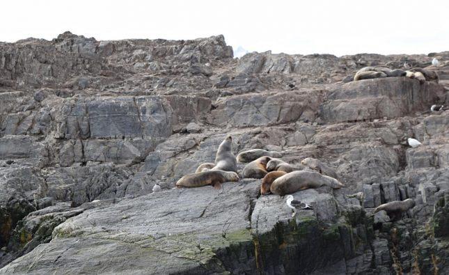 navegacao canal de beagle (14)