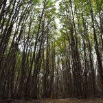 Ushuaia: Tour no Parque Nacional Tierra del Fuego