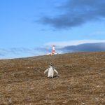 Punta Arenas: Passeio de barco para ver Pinguins nas Ilhas Magdalena e Marta