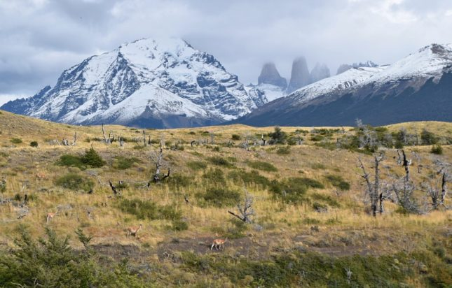 Puerto Natales: Tour Full Day no Parque Nacional Torres del Paine