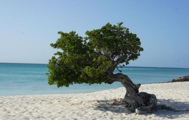 Aruba: Informações Práticas