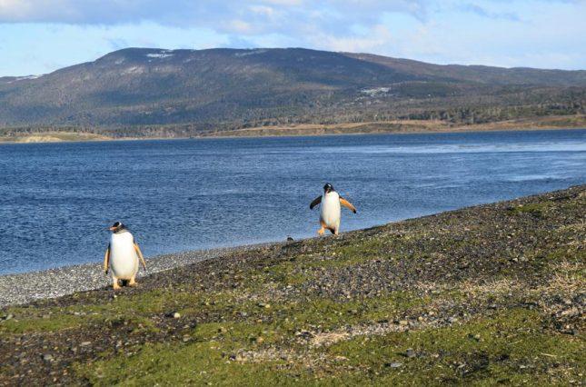 Ushuaia: Caminhada com Pinguins na Isla Martillo durante o Inverno