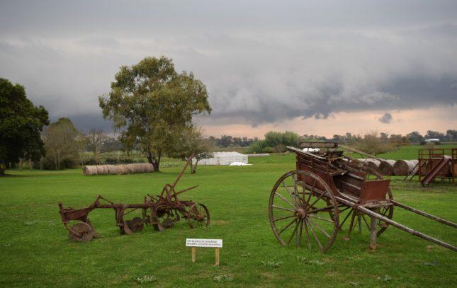 Uruguai: Carmelo e suas vinícolas