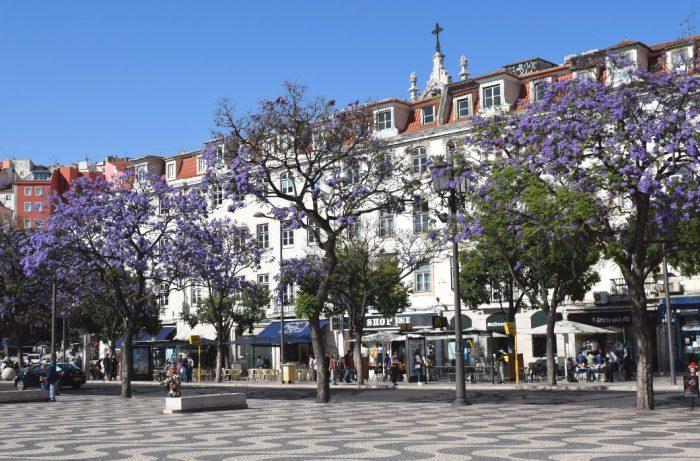 Portugal: Os Jacarandás de Lisboa
